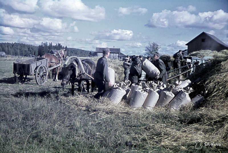 Sotilaat-heinäpelto-SA-kuva